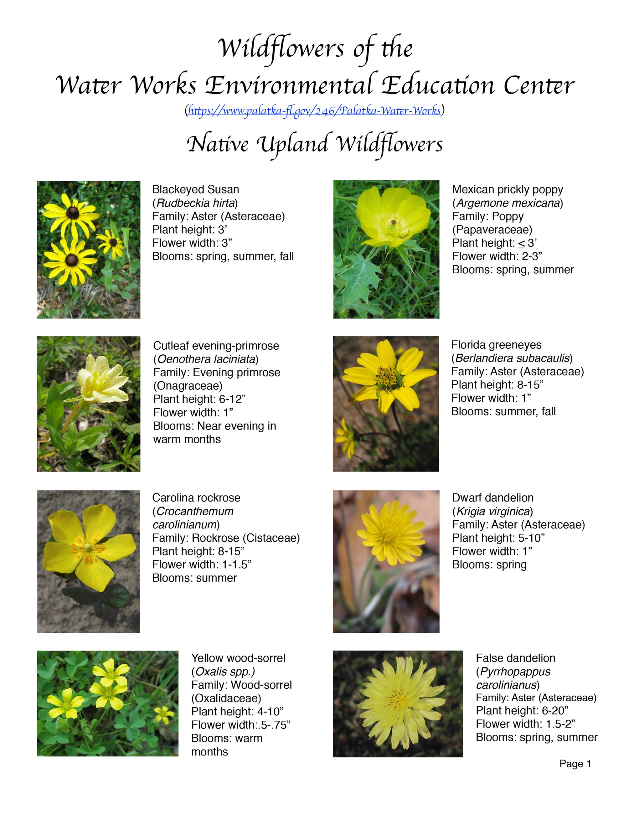 Water Works EEC Wildflower Brochure page1