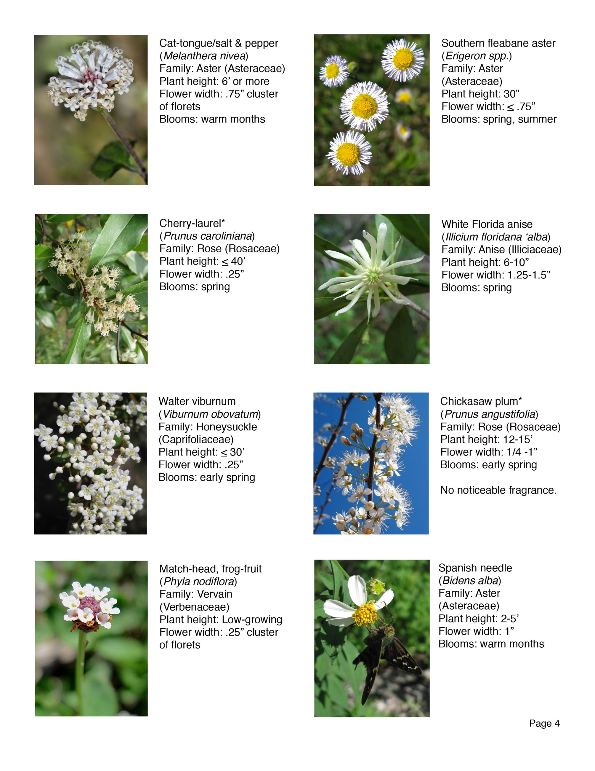 Water Works EEC Wildflower Brochure page 4