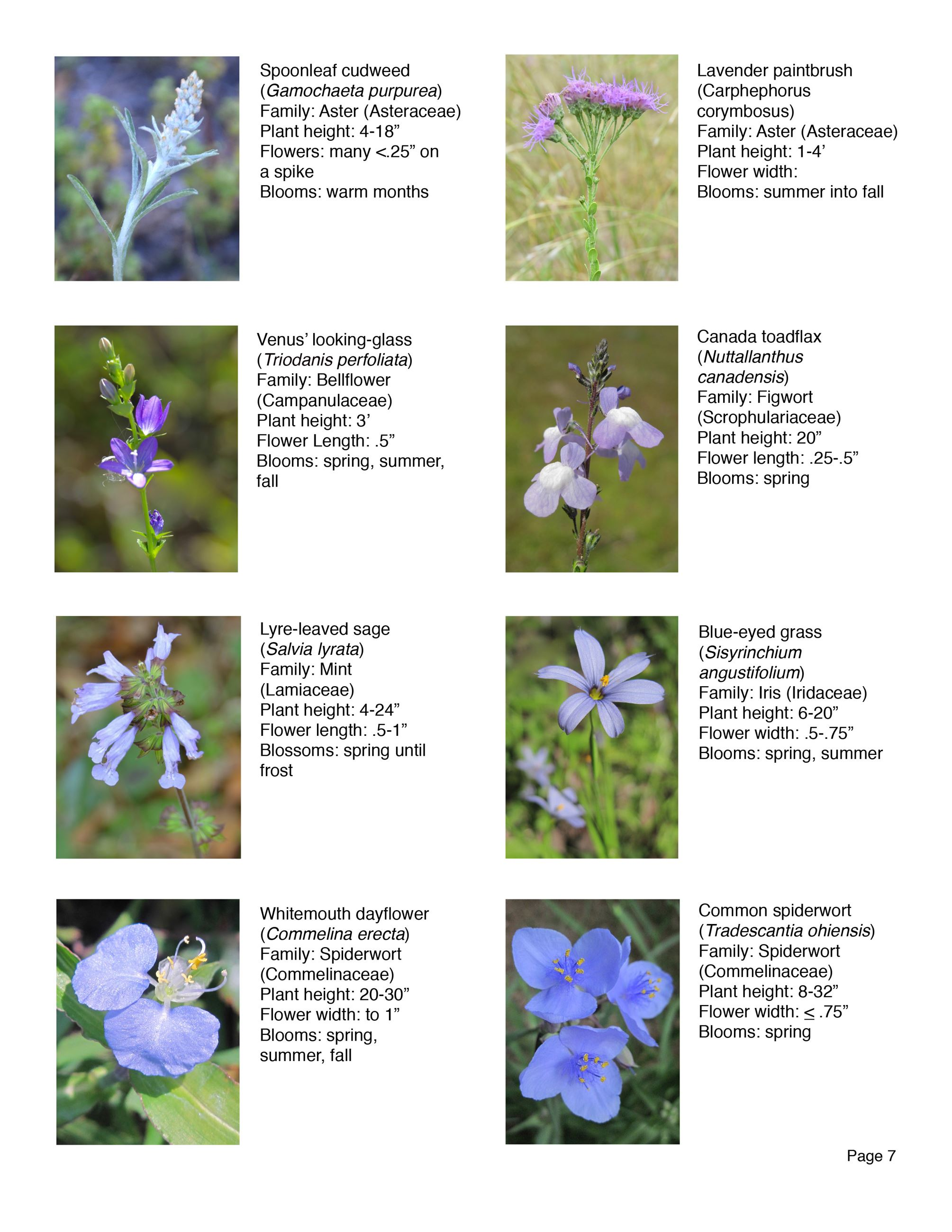 Water Works EEC Wildflower Brochure page 7