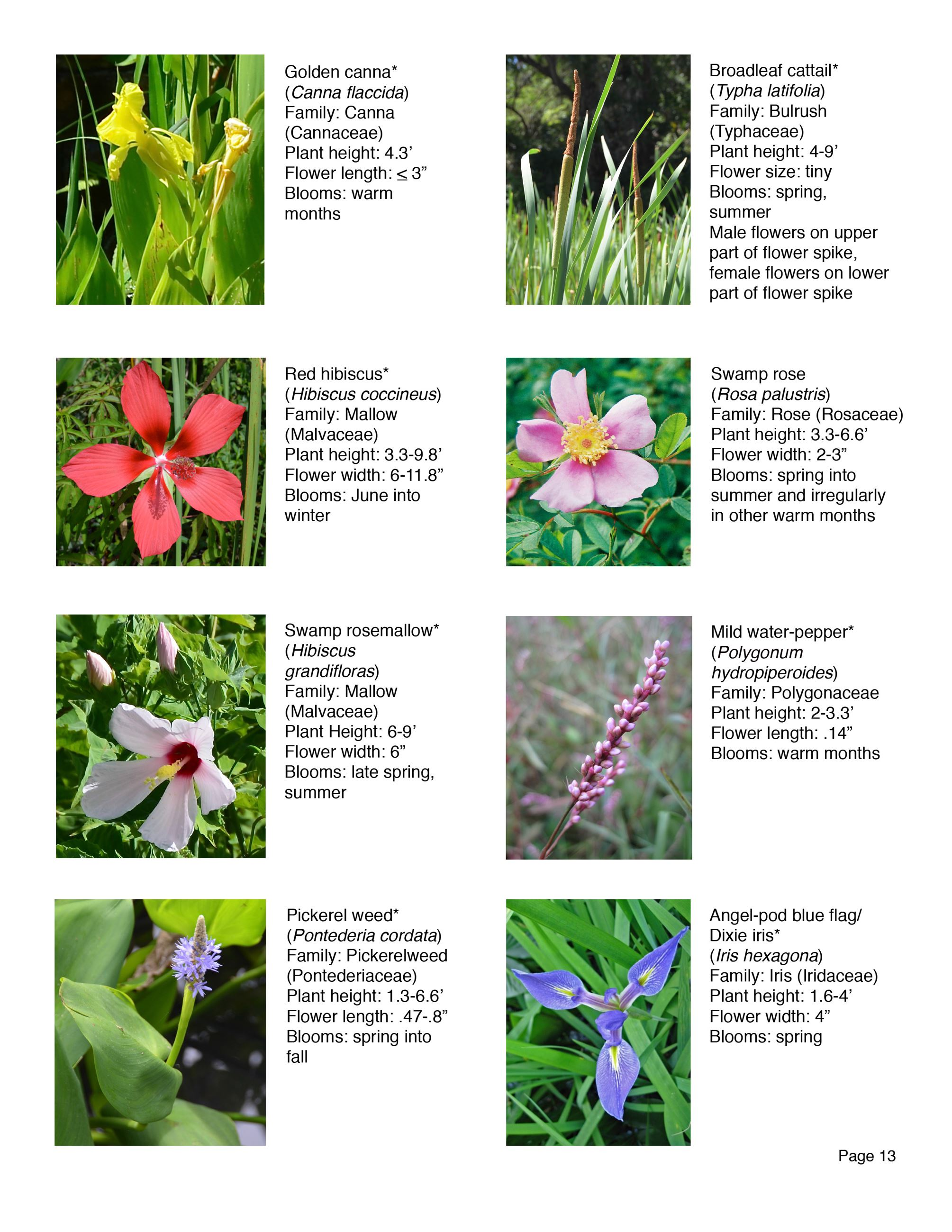 Water Works EEC Wildflower Brochure page13